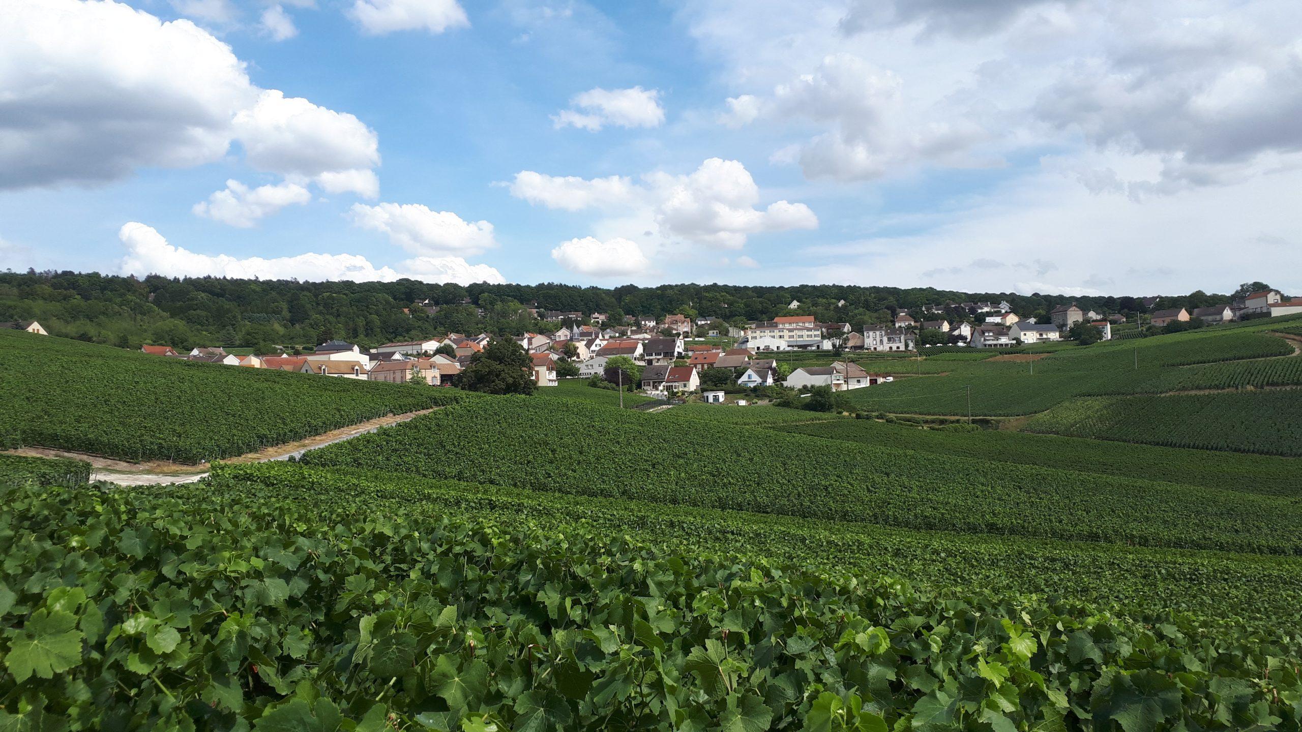 Vue _sur_vignoble_de_Champillon