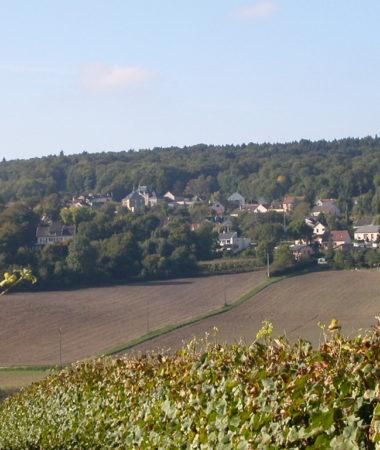 Vue_sur_le_vignoble_et_la_foret_autour_de_Germaine